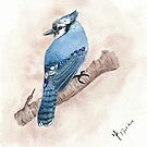 Blue Jay Watercolour by Martina Fagan