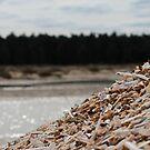 Shell pile. by FraserJ
