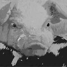 Pig by Annmarie *