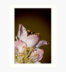 Full Blossom Art Print
