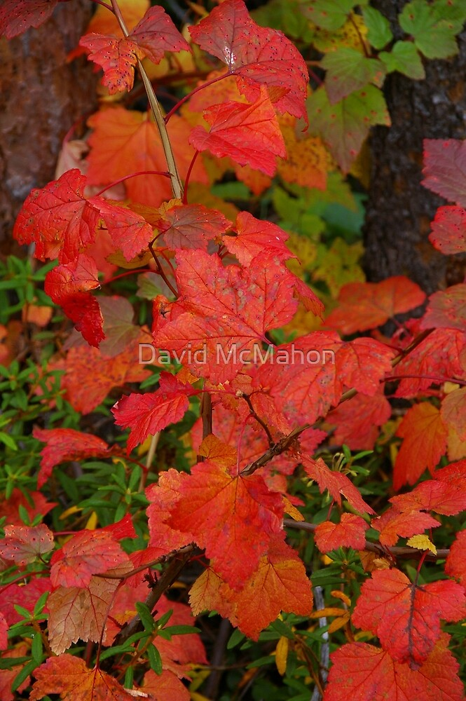 Nature's Supreme Artistry by David McMahon