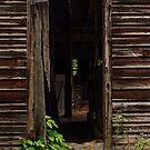 Into the Hog Barn by Debra Fedchin
