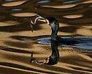 Cormorant With Eel by Neil Bygrave (NATURELENS)