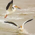 Pelican Pleasure by vette