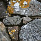 Lichen It by Mandy Kerr