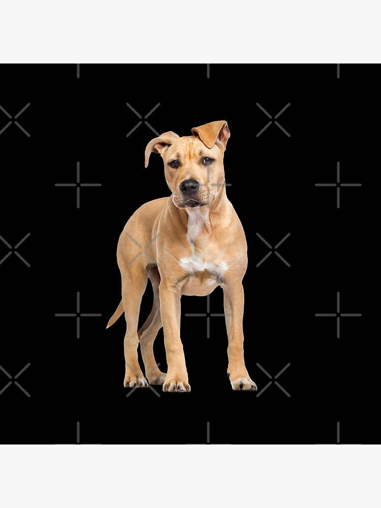 American Staffordshire Terrier Man and Womans Best Friend - Funny American Staffordshire Terrier Gift For Dog Lover by dog-gifts
