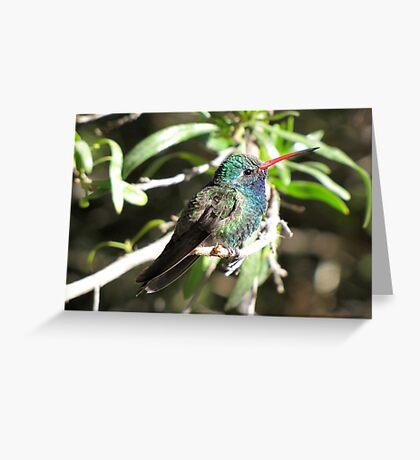 Broad-billed Hummingbird ~ Male II Greeting Card