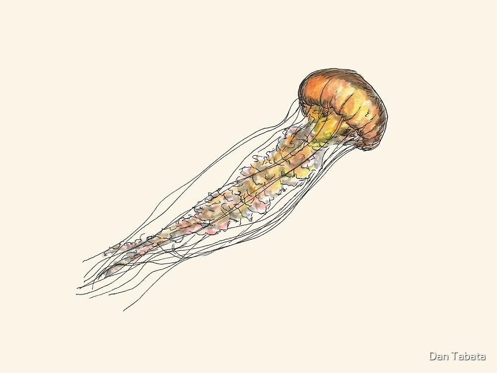 Jellyfish by Dan Tabata