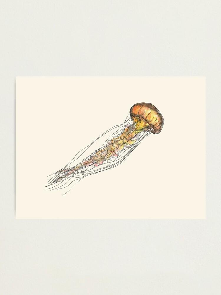 Alternate view of Jellyfish Photographic Print