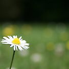 Daisy Alone by weallareone