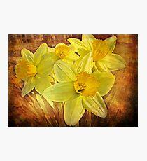 Spring Sonata Photographic Print