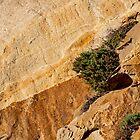 Small Tree on Morro Rock - Morro Bay, California, USA by Buckwhite