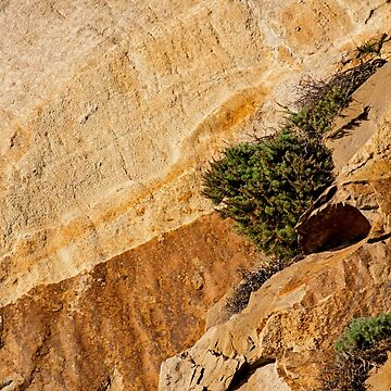Small Tree on Morro Rock - Morro Bay, California, USA by Buckwhite