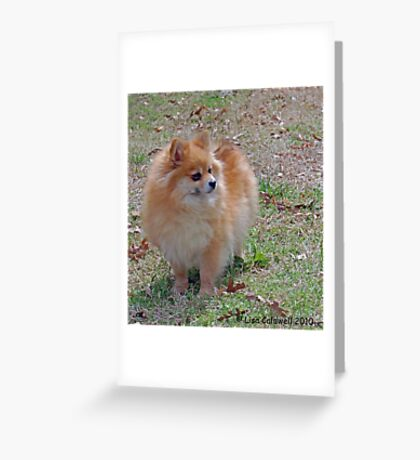 Pom Baby Greeting Card