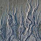 Curving tendrils von Celeste Mookherjee
