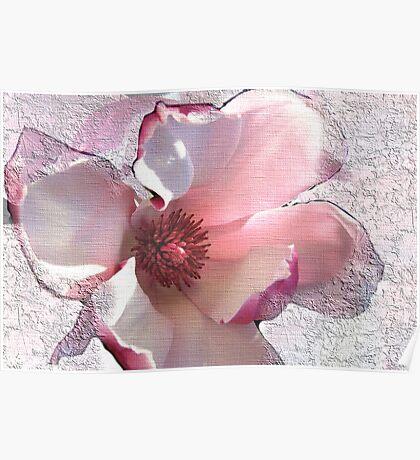 Sweet Magnolia Solangeana! Poster