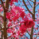 Dallas Blooms by Glenna Walker