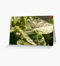 gooseberry Greeting Card