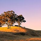 Sun Setting on the Adelaide Hills #2 by Lexa Harpell