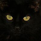 Raven by Lorelle Gromus