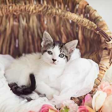 Basket Kitty by ames777