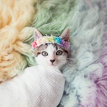 Rainbow Kitten by ames777