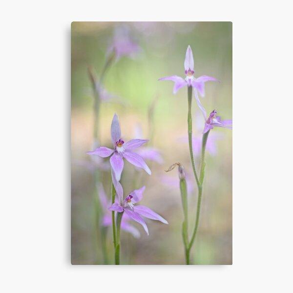 Tiny purple orchid Metal Print