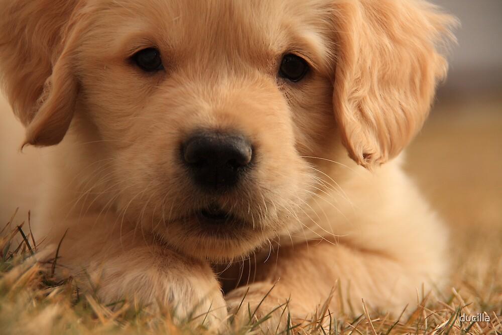 I am SO cute!... by ducilla