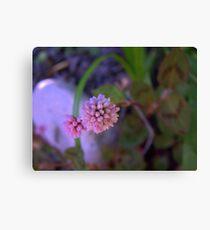 Mace Flower Canvas Print