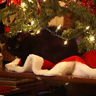Christmas Kitty by Lorelle Gromus