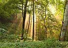 Rays of Sunlight by Declan Lopez