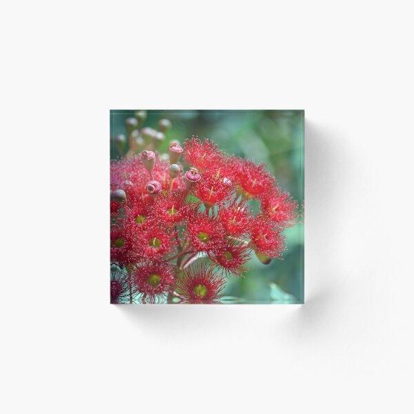 Red Flowering Gum Acrylic Block