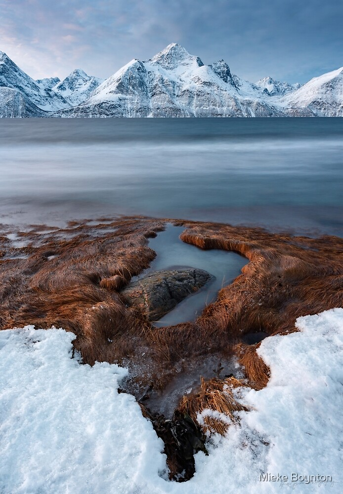 Shapes of Winter by Mieke Boynton