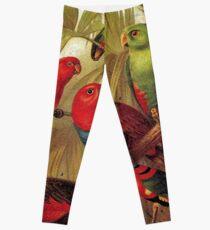 Parrots in the Jungle Leggings