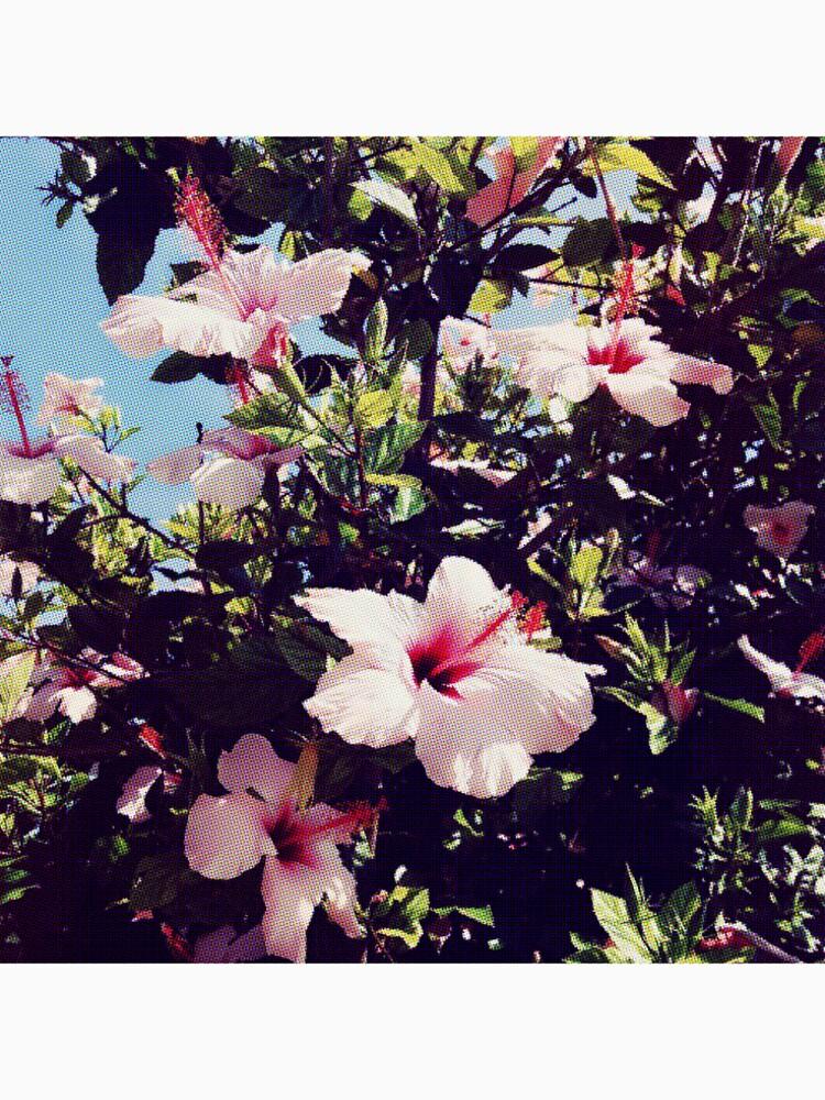 Ibiscus tropisch von nefertarii