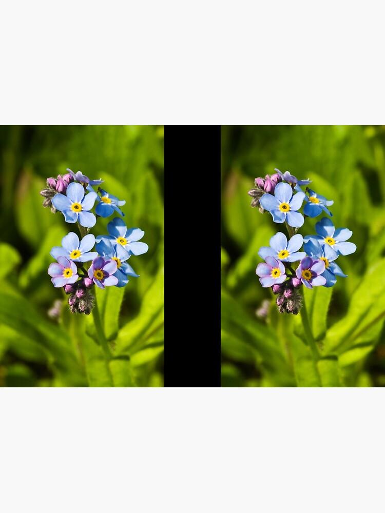 Forget-me-not Flowers (Myosotis arvensis) by SteveChilton