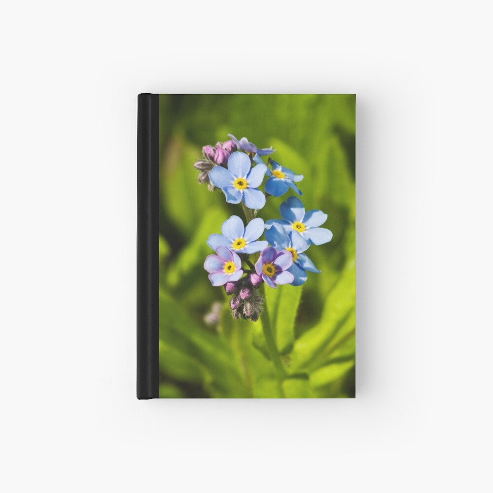 Forget-me-not Flowers (Myosotis arvensis) Hardcover Journal
