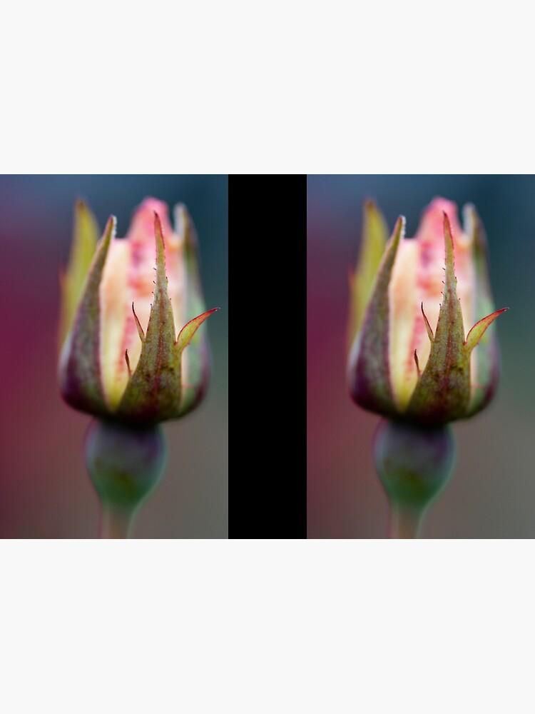 Rosebud by SteveChilton