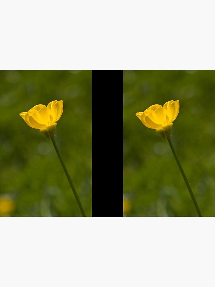Bulbous Buttercup (Ranunculus bulbosus) by SteveChilton
