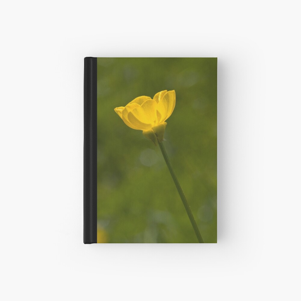 Bulbous Buttercup (Ranunculus bulbosus) Hardcover Journal