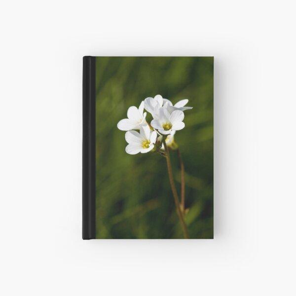 Meadow Saxifrage (Saxifraga granulata) Hardcover Journal