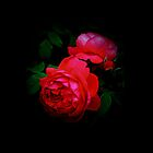 Two Red Roses by Beth Brightman