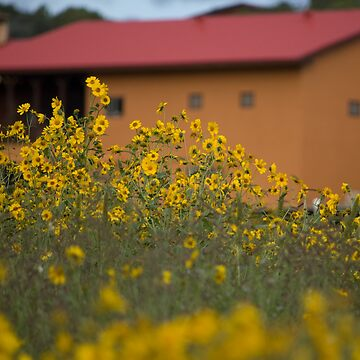 Field of Flowers by harmoniccontent