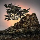 Hang On Lone Tree Siletz Bay by Charles & Patricia   Harkins ~ Picture Oregon