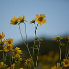 Golden Flowers by harmoniccontent