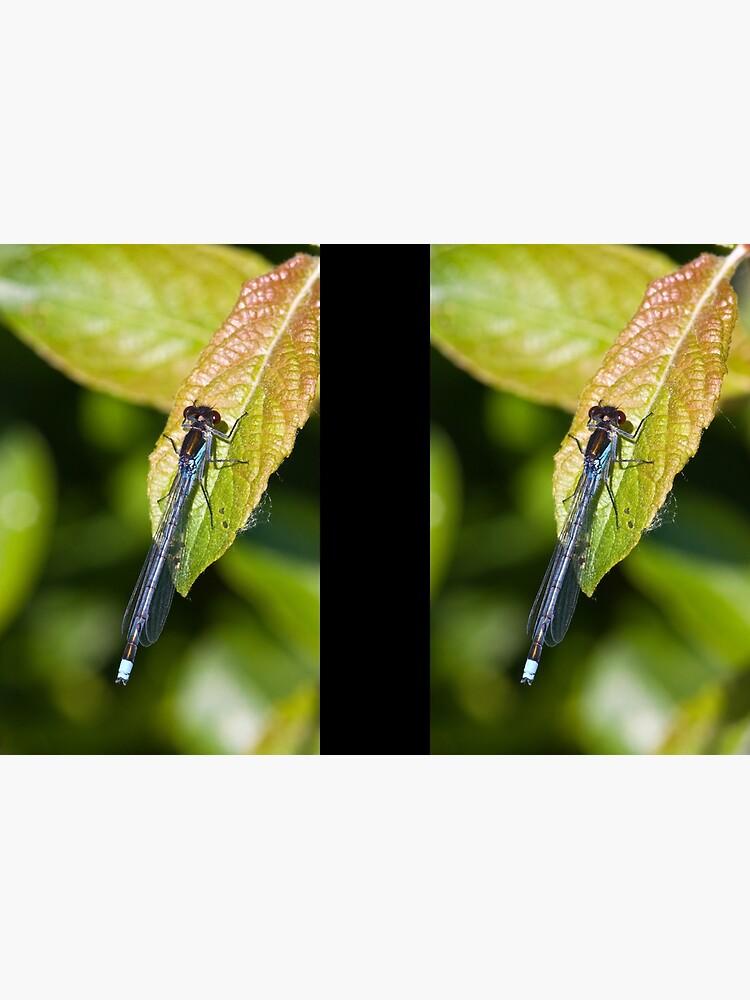 Red-eyed Damselfly (Erythromma najas) by SteveChilton