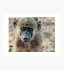 Vervet monkey portrait Art Print