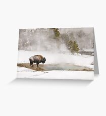 Bison Keeping Warm, Yellowstone National Park Greeting Card