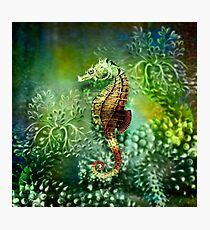 Seahorse Tropical Marine Fishes Photographic Print