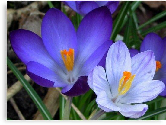Different purple by ienemien